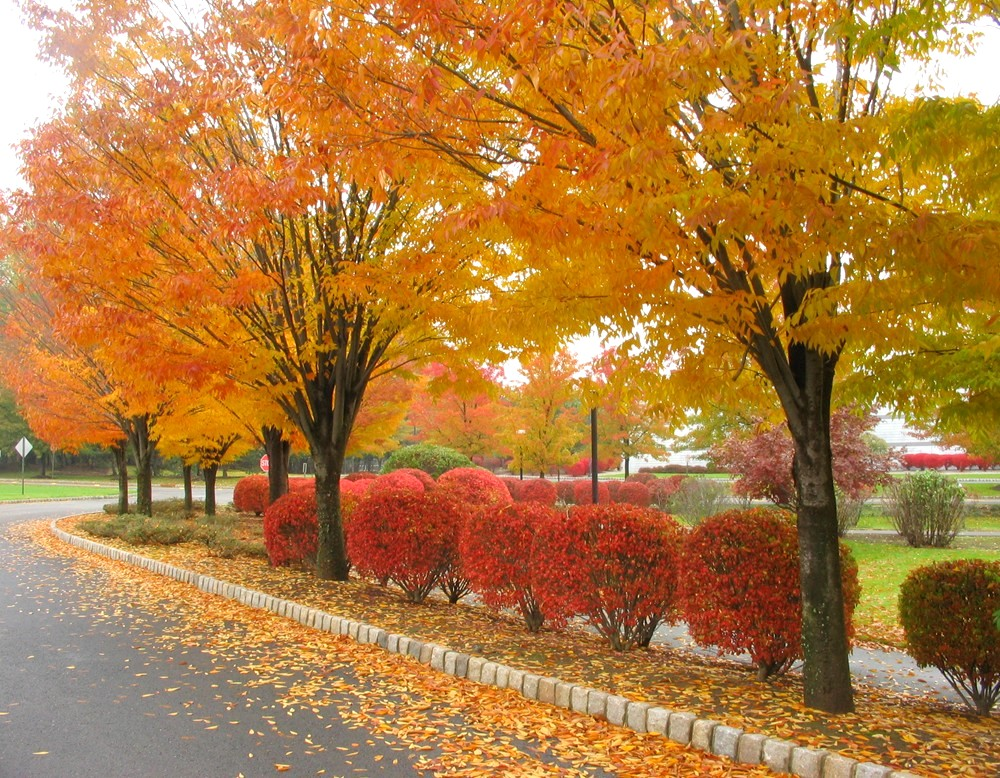 New jersey fall foliage images of colorful autumn leaves