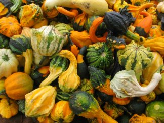 http://www.autumn-pictures.com/pumpkins-gourds/tnornamental-autumn-crops1.jpg